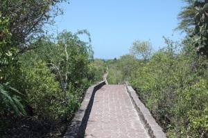 Back on Santa Cruz, walked this 2-mile path to a beautiful beach.