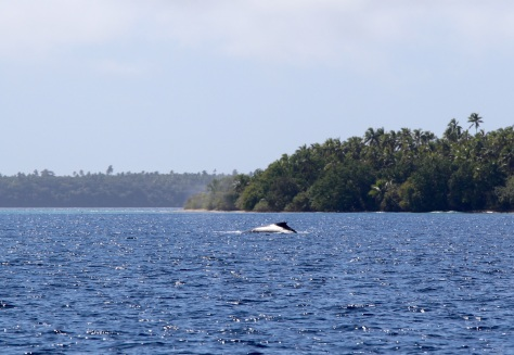 We did have one more whale encounter, at a distance.