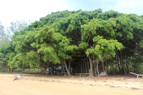 By the banyan tree