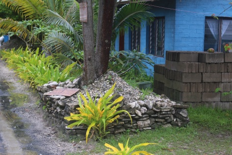Raised bed for breadfruit tree, to keep roots above the salinated water table.