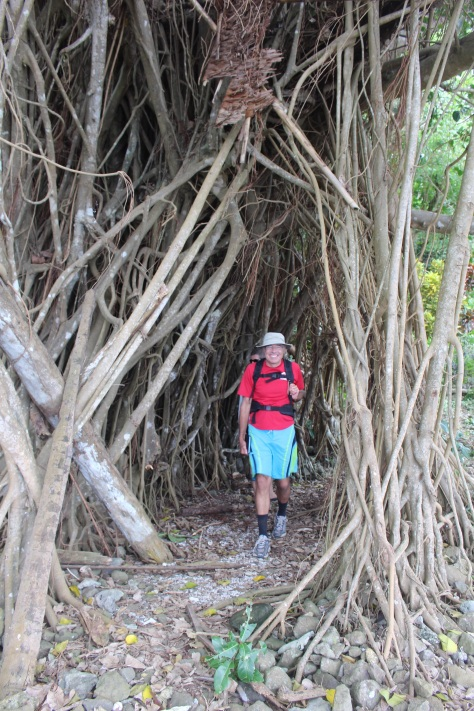 Heading back, it is good luck to walk through the banyan tree, and you're supposed to make a wish as well.