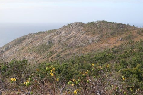 On the hike up to Cook's Lookout, where he spotted the offshore reefs from the summit