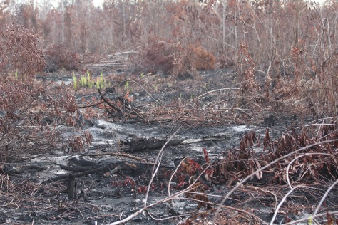 The major fire was several miles away, but we visited some scorched areas nearby.