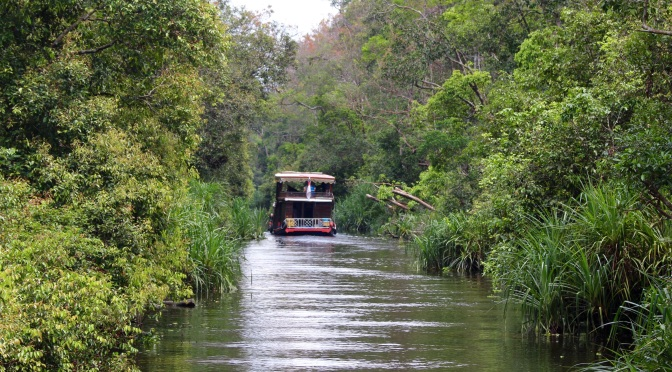 Kumai — Orangutans vs Palm Oil