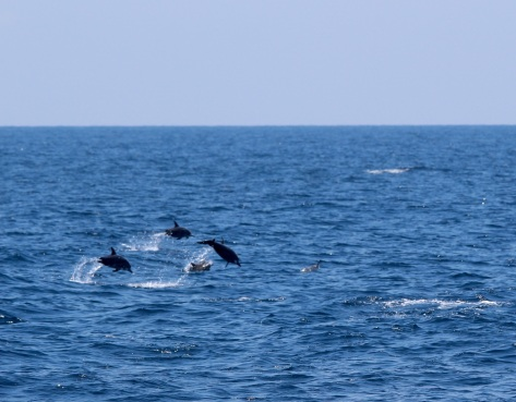 Dolphins playing nearby