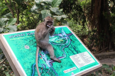 You are here...at the monkey forest