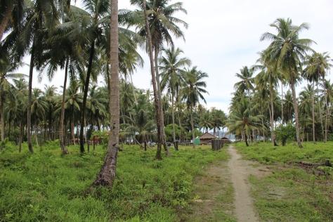 Sooli's property