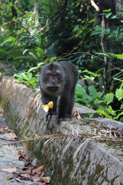 These monkeys were quite aggressive, not like the friendly ones in Bali
