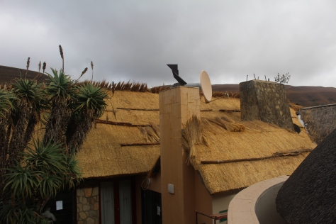 Everywhere we went the thatched roofs were beautiful and apparently completely watertight. Here they are replacing the thatch on the restaurant.