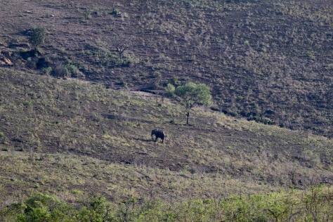 Elephant in the distance