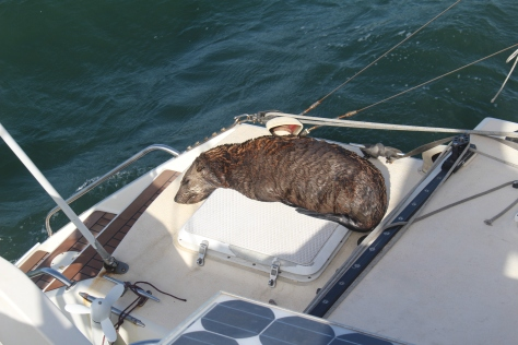 When the sun shines they like to haul out on any available surface... Brings back memories of the sea lions in the Galapagos!