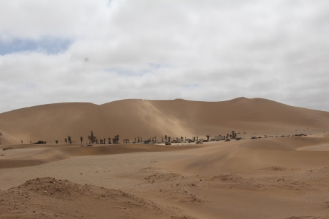 Our first glimpse of Dune 7. We thought we would be trying sand boarding...