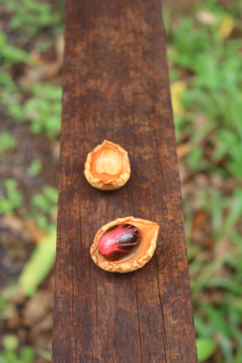 Nutmeg (and the red part is mace)
